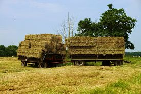 picture of hayride  - Large bales of straw on a tractor trailer - JPG