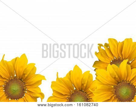 poster of agriculture, background, beautiful, beauty, blooming, blossom, botanical, botany, bright, closeup, color, colorful, crop, cultivated, daisy, environment, field, flora, floral, flower, fresh, freshness, garden, golden, green, growth, head, landscape, leaf,