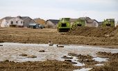stock photo of unnatural  - Residential development resulting in the loss of natural habitat for these ducks - JPG