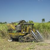 foto of sugar industry  - sugar cane harvest - JPG