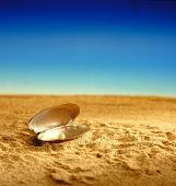 Pearly Oyster Shell On The Sandy Beach