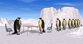 Pinguine Rekrutierung interview