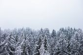 Winter Season Snow Covered Trees Evergreen Forest Nature Landscape Background poster