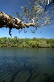 Australische Bush-Billabong