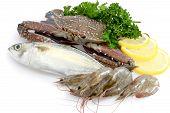 Variety of Fresh Sea Food