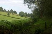 A lush summer meadow with hawthorn hedges and freshly chopped wood bordering the trail through the gully