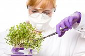 female scientist in goggles, gloves and mask looking carefully at plant sample, laboratory shoot, isolated on white background