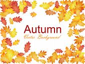 Autumn Vector Background With Oak Leaf Frame Or Border Illustration On White Background. Autumn Leav poster
