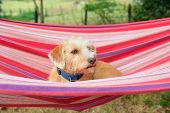 Portrait outdoor little cross breed dog in colorful striped hammock poster