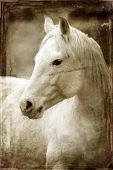 Jahrgang Foto von Pferden mit weißen und grauen Wolken im Himmel