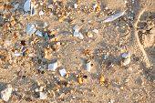 Winter Shoreline Shells & Such