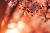 Spring Blossom Background. Beautiful Nature Scene With Blooming Tree And Sun Flare During Sunset. Su poster