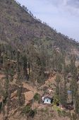 Trees on Hills Near Mt Bromo