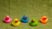 Rubber Ducks Isolated, With Room For Text