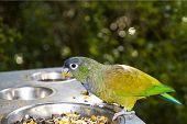 Maximillian Parrot