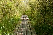 Wood Path Or Boardwalk In The Forest
