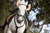 picture of lipizzaner  - A woman riding a beautiful white Lipizzan stallion - JPG