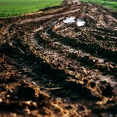 Tractor Track Mud Field Farming Ecology