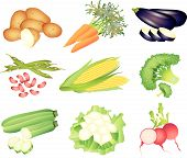 vegetables illustration set