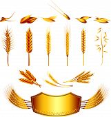 wheat illustration set