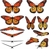 stock photo of monarch butterfly  - Monarch butterfly vector art in several different views and poses - JPG