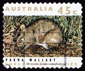 Postage Stamp Australia 1992 Parma Wallaby, Marsupial Animal