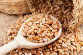 Wheat Grains  In Wooden Spoon