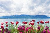Flowers Near Lake, Montreux. Switzerland