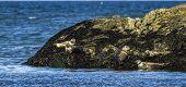 Kleine Robbenkolonie