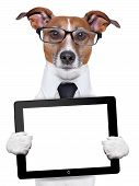 foto of working-dogs  - business dog with a tablet pc and glasses - JPG