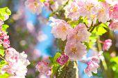 Blüte Baum Closeup