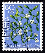 Postage Stamp Switzerland 1974 Mistletoe, Viscum Album, Plant