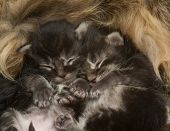 Two Newborn Kittens Sleeping