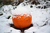 foto of blanket snow  - A pumpkin covered in a blanket of freshly fallen snow.