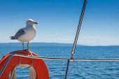 Seagull standing on the orange lifebelt against the blue sky