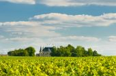 stock photo of bordeaux  - Chateau and vineyard in Margaux Bordeaux France - JPG