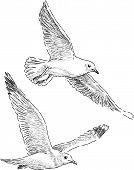 Flying Sea Gulls.eps