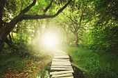 stock photo of surrealism  - a magical bridge in a green lush forest - JPG