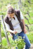 Woman winegrower working in vineyard