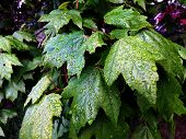 raindrop covered leaves