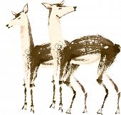 The view of two deers
