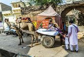 Family Uses Camel Taxi In Pushkar