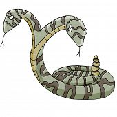 An image of a two-headed snake.