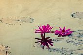 Beautiful Blossom Lotus Flower In Thailand Pond Reflect On Water,vintage Postcard Effect