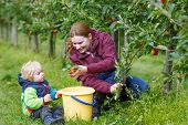 Young Mother And Adorable Little Toddler Boy Picking Organic Apples