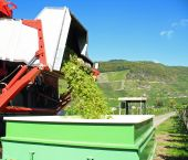 Machine grape harvest