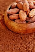 raw cocoa beans on cocoa powder - food and drink