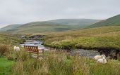 Sheep in Welsh landscape