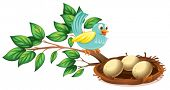 Illustration of a blue bird watching the eggs in the nest on a white background