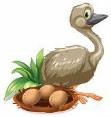 Illustration of an ostrich beside the nest with eggs on a white background